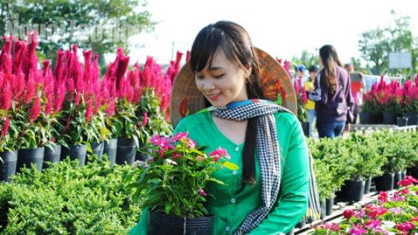 CHÍNH THỨC: Ngày mai, du khách sẽ đo chiều cao để vào làng hoa lớn nhất miền Tây