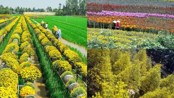 3 làng hoa miền Tây rộn ràng khoe sắc dịp cận Tết Nguyên Đán