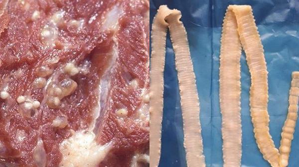 Cách nhận biết thịt lợn nhiễm sán