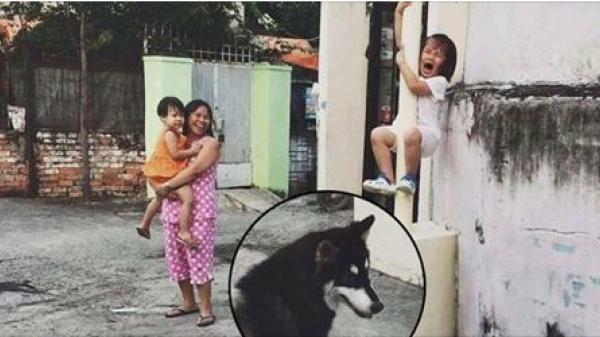Nổi tiếng nhất hôm nay: Bức ảnh bé gái khóc thét vì sợ chó, leo tót lên cột điện