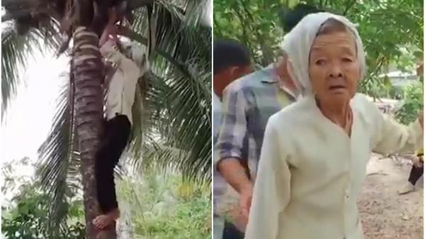 Trà Vinh: Cụ bà gần 80 tuổi trèo hái dừa nhanh thoăn thoắt, gái 18 cũng chào thua