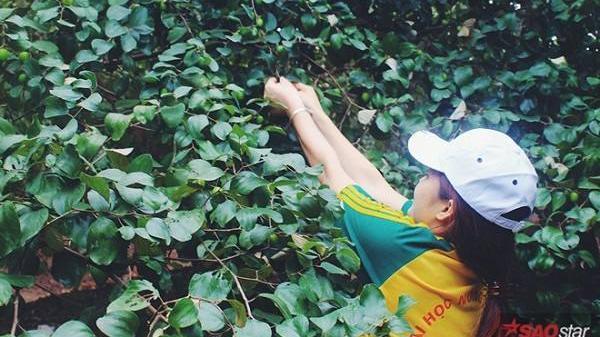 Mùa táo về, lập team tới Gia Lâm oanh tạc vườn táo ngọt lịm tim chỉ 10- 20k/người