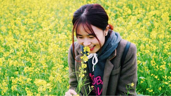 CLIP HOT: Đi nhanh kẻo lỡ cả một thảo nguyên hoa cải vàng rực ngút mắt, đẹp như phim không xa Hưng Yên