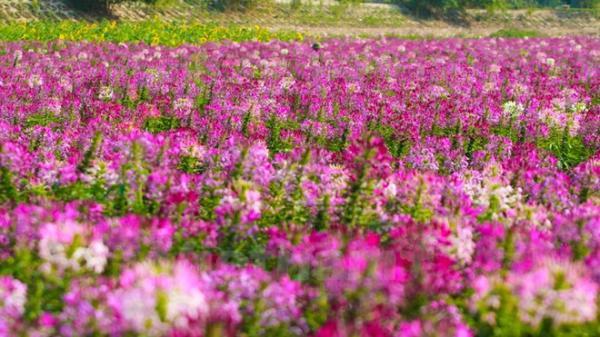 """Ngay ở Hà Nội có một nơi được gọi là """"thiên đường hoa"""""""
