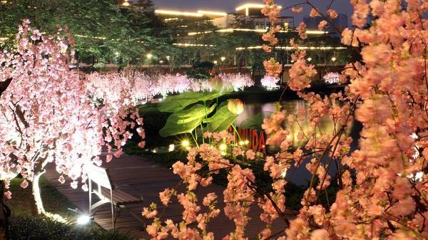 Giới trẻ Hà thành tha hồ chụp ảnh Tết, du xuân ở vườn hoa Anh đào lung linh ngay gần trung tâm thành phố