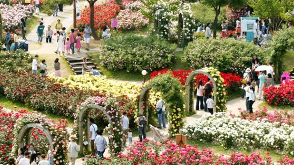 Hà Nội: Cận cảnh hàng nghìn gốc hoa hồng thật được trưng bày tại lễ hội hoa hồng Bulgaria