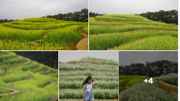 Giới trẻ phát sốt với những THỬA RUỘNG BẬC THANG đầu tiên ngập tràn sắc hoa ngay gần Bắc Ninh