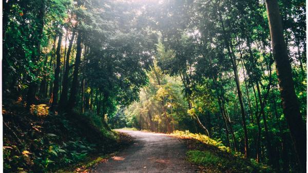Hà Nội: Đại học duy nhất ở Việt Nam có 1 khu rừng tuyệt đẹp ngay trong khuôn viên trường, tha hồ sống ảo