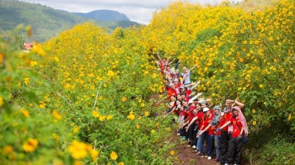 Các địa điểm 'săn' hoa dã quỳ đẹp mê hồn ngay gần Hà Nội