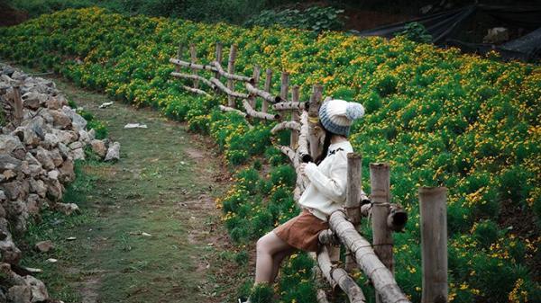 """Giới trẻ """"phát cuồng"""" với Thảo nguyên hoa đẹp lung linh như khu vườn cổ tích giữa lòng Hà Nội"""
