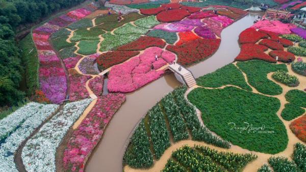 """Ngay gần Vĩnh Phúc, đẹp phát hờn thung lũng hoa """"lạ mà quen"""" đang mùa nở rộ"""