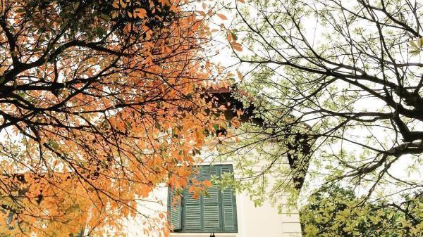 Mùa thu Hà Nội và 'con đường xưa em đi': Những điểm chụp ảnh lãng mạn nhất trong thành phố