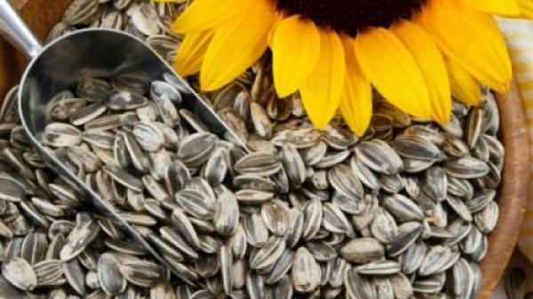 Đọc bài này bạn sẽ không dám ăn nhiều hạt hướng dương nữa