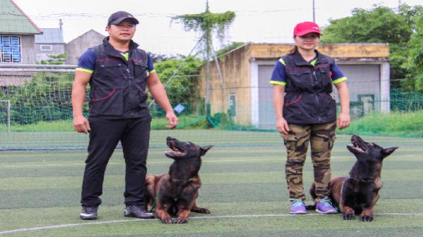 Bên trong trại huấn luyện chó bảo vệ của võ sư karatedo