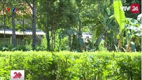 Có một ngôi làng ở Hà Tĩnh không bê-tông, tường gạch, chỉ thấy mướt mắt với bờ rào cây xanh