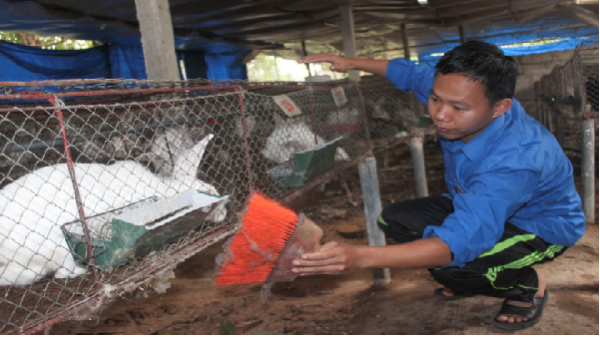 Cử nhân văn thành triệu phú nhờ nuôi thỏ