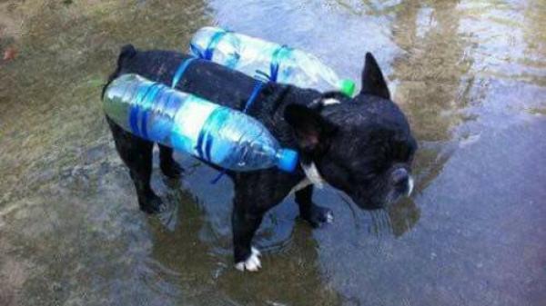 Hình ảnh chú chó với chiếc phao tự chế và câu chuyện phía sau về mưa lũ miền Trung khiến nhiều người nhói lòng