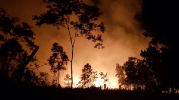 Cháy rừng trong đêm ở Hà Tĩnh, hàng trăm người tham gia dập lửa