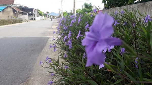Hà Tĩnh: Mê mẩn vẻ đẹp sắc hoa tươi thắm, thân thiện môi trường ở xã nông thôn mới