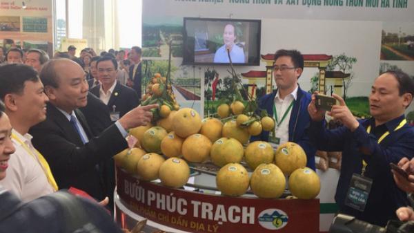 Thủ tướng Nguyễn Xuân Phúc khen ngợi bưởi Phúc Trạch - Hà Tĩnh