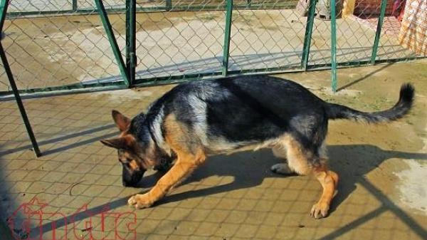 Dắt chó ra đường không rọ mõm có thể bị phạt 1 triệu đồng