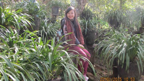 Lai Châu: Nghề trồng hoa địa lan ở Sin Suối Hồ