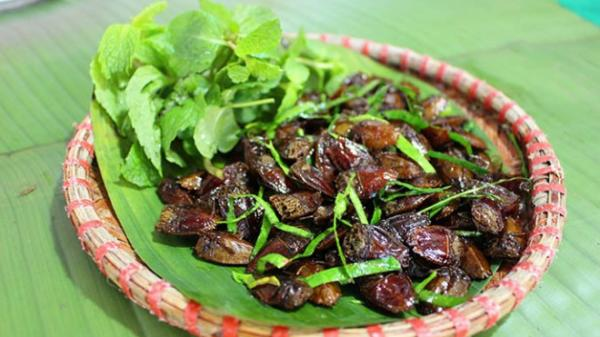 Đặc sản nổi tiếng ở Sơn La, bắt đầy ngoài ruộng giá đắt ngang ngửa bò Mỹ