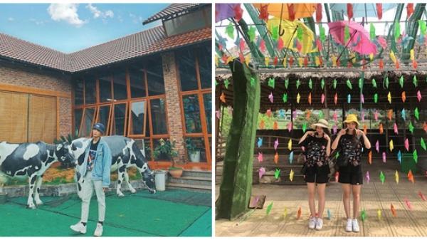 Sơn La: Trại bò sữa nhiều góc check-in tuyệt đẹp ở Mộc Châu thu hút giới trẻ
