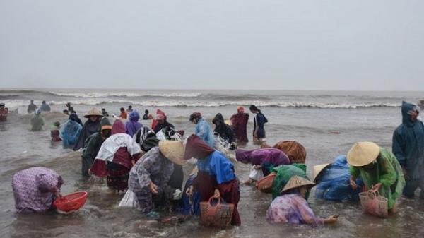 Hà Tĩnh: Cả trăm người dân đổ xô đi vớt vẹm trôi dạt vào bờ
