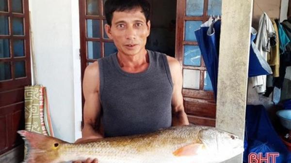 Hà Tĩnh: Bắt được cá dài 70cm, nặng 5,4kg, nghi sủ vàng quý hiếm, giá tiền tỉ