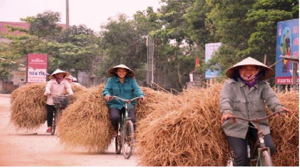 Nét độc đáo về chợ bán rơm 'duy nhất' tại miền quê nghèo Hà Tĩnh