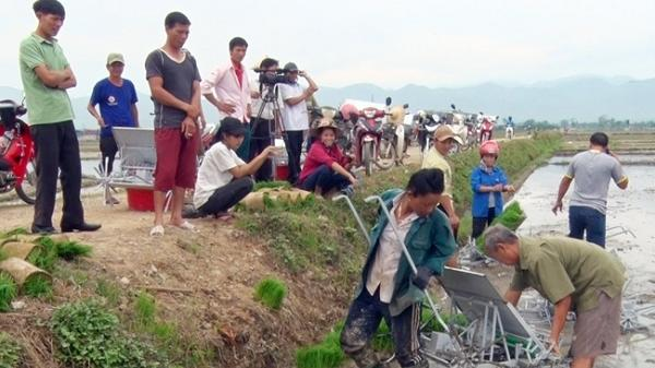"""Triển vọng mô hình cánh đồng """"một giống"""" ở Điện Biên"""