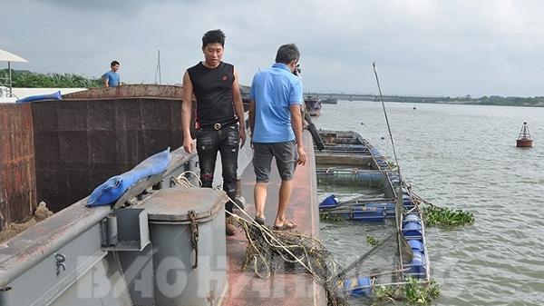 Hải Dương: Tàu lớn đâm vào lồng nuôi cá, 10 tấn cá thoát ra sông