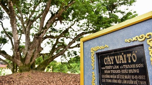 Thanh Hà: Đầu tư hơn 7 tỷ đồng làm đường, bãi đỗ xe vào vườn cây vải tổ