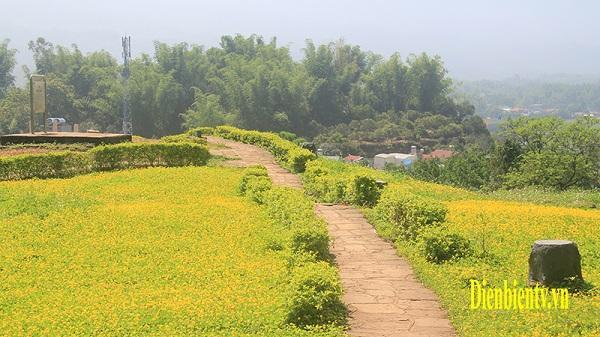 Ngỡ ngàng vẻ đẹp hoa cỏ lạc bên những hiện vật lịch sử
