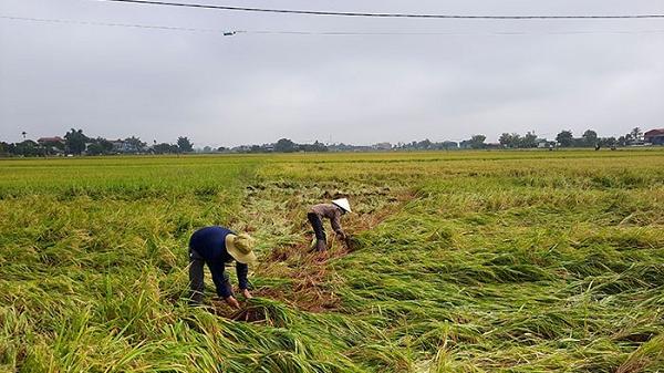 Mưa đá, giông lốc gây thiệt hại khoảng 20,5 tỷ đồng tại huyện Điện Biên