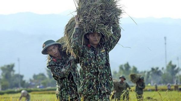 Điện Biên: Bộ đội giúp người dân thu hoạch lúa Đông Xuân
