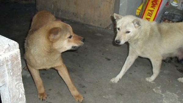 Xuất hiện bệnh dại chó, mèo ở huyện Mường Nhé