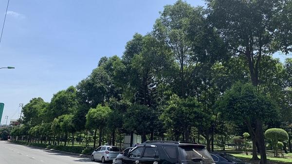 Hàng nghìn cây sao đen được Chủ tịch Quốc hội Nguyễn Thị Kim Ngân chỉ đạo trồng ở Hải Dương cách đây gần 20 năm, giờ ra sao?