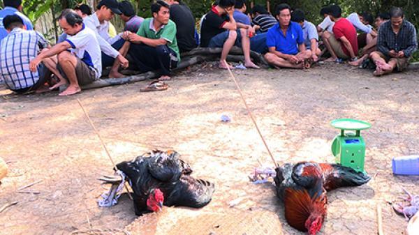 Hậu Giang: Bắt quả tang 40 đối tượng đá gà ăn tiền