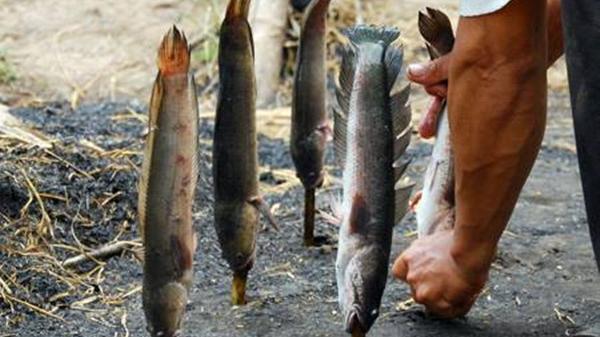 Hậu Giang: Về miền Tây ăn cá lóc nướng trui