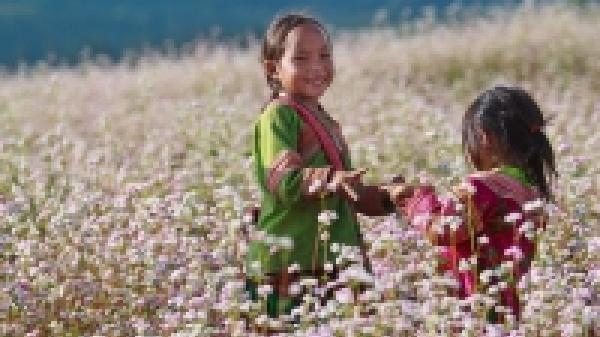 Không cần lên tận Hà Giang, không xa Hòa Bình có một nơi để ngắm hoa tam giác mạch lung linh và cải vàng rực rỡ