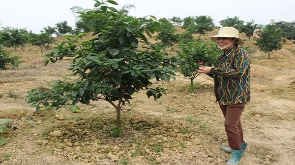 Cho vay hộ sản xuất, kinh doanh vùng khó khăn, mở ra cơ hội giúp nông dân