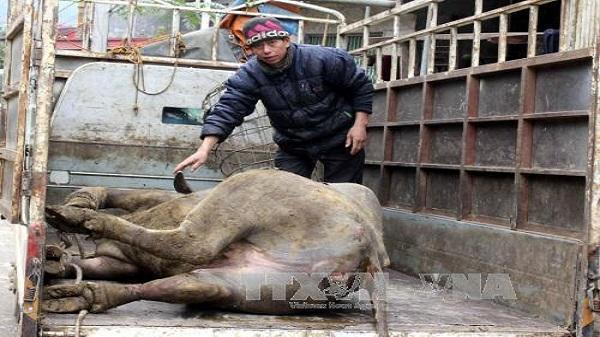 Đã có hơn 2.160 con gia súc bị chết rét