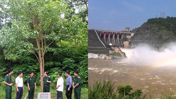 Cây bồ đề đất Phật trên công trình Thủy điện Hòa Bình