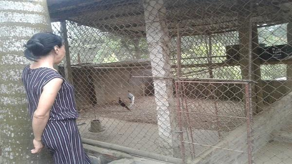 Hòa Bình: Lập nghiệp từ nuôi chim rừng