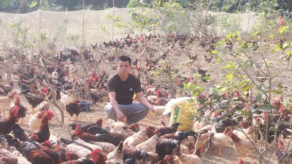 Về Lạc Thủy (Hòa Bình) gặp chàng thanh niên 8X làm giàu từ nông trại thu lợi gần nửa tỷ đồng mỗi năm