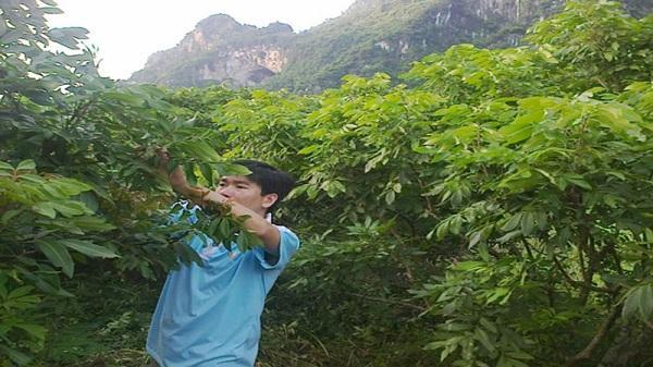 Hòa Bình: Chàng thanh niên làm giàu trên vùng đất khó