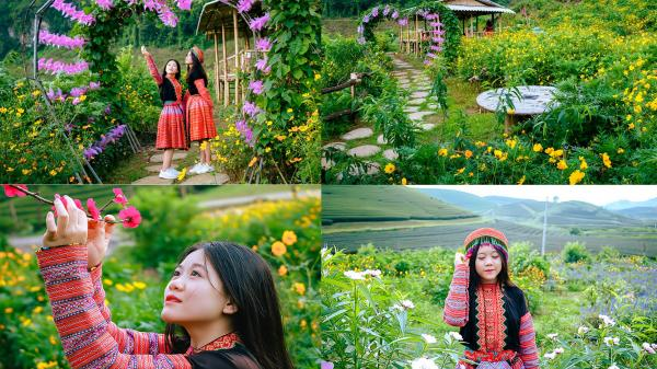 ĐẸP RỤNG TIM với thung lũng hoa NÚI ĐÁ TRẮNG có 1 – 0 – 2 ngay gần Hòa Bình, hoa đang nở rộ đón khách dịp lễ 2/9