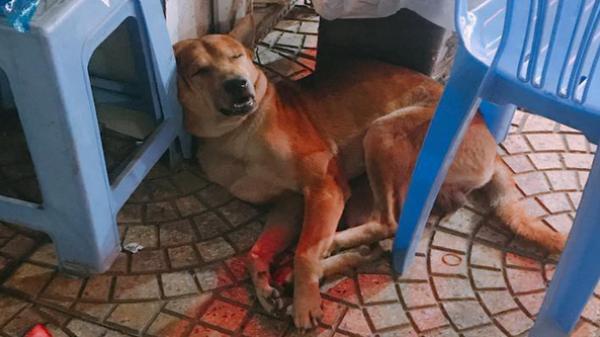 """Chạy thoát khỏi cẩu tặc chích điện, chú chó được những bác bảo vệ cưu mang, cho đi """"tuần tra"""" mỗi đêm"""